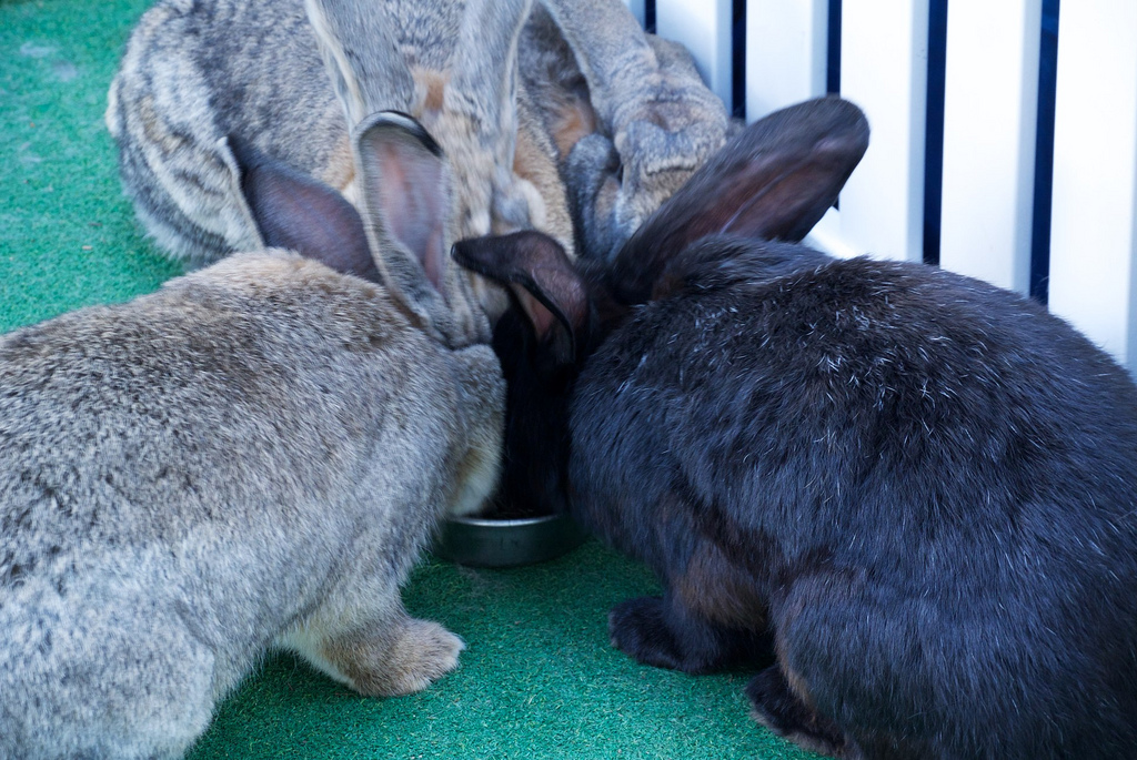 store kaninracer