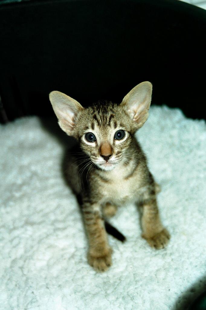 4174744088_1f2133abbd_b_cats-litter1